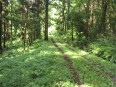 日帰り林道ツーリング 003